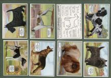 Collectable Cigarette cards Champion Dogs ,Greyhound,Terriers, Retriever, Dalmatian,